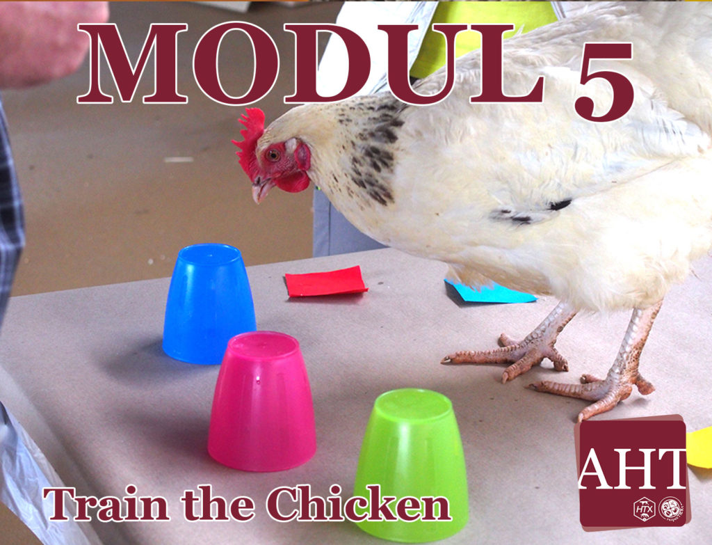 Train the Chicken